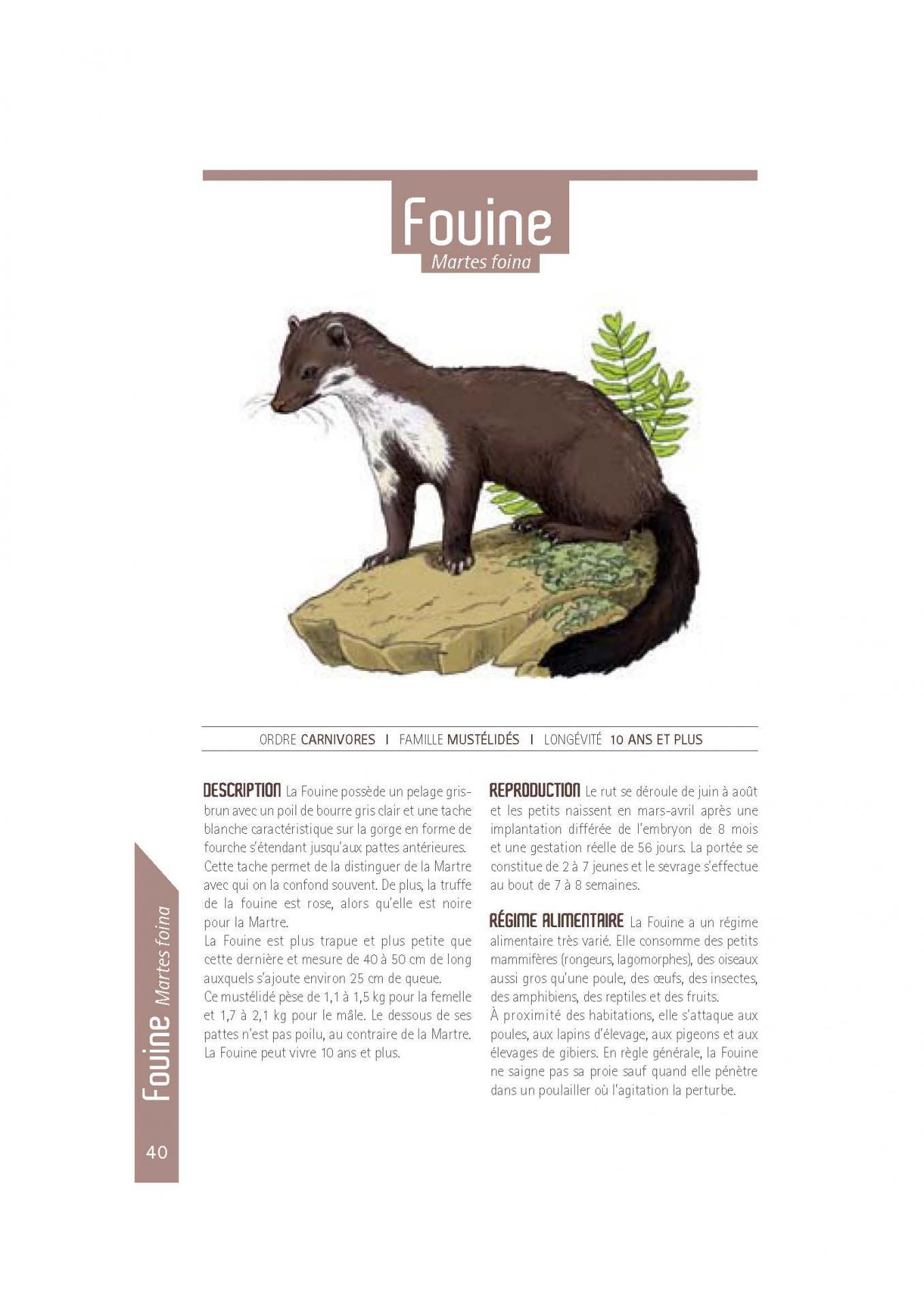 Fouine 2